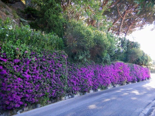 Siepi Da Giardino Fiorite : Siepi da giardino profumate piante ideali per siepi da giardino